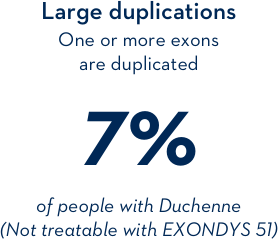 Large duplications: one or more exonds are duplicated 7% of people with Duchenne (Not treatable with EXONDYS 51)