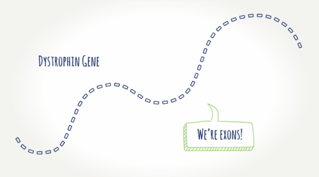 EXONDYS 51 illustration depicting dystrophin gene and exons as part of understanding exon skipping technology